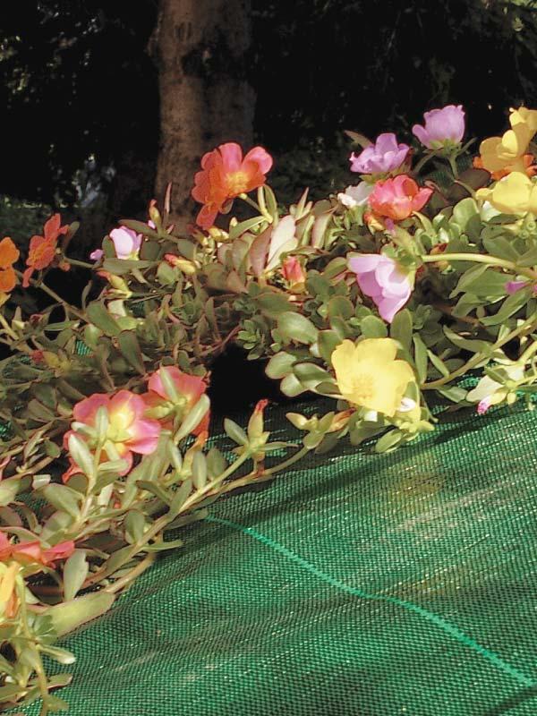 Anti-mauvaises herbes et paillage