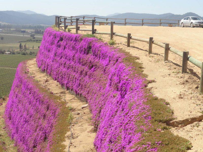 Terre rinforzate rinverdite - Cile