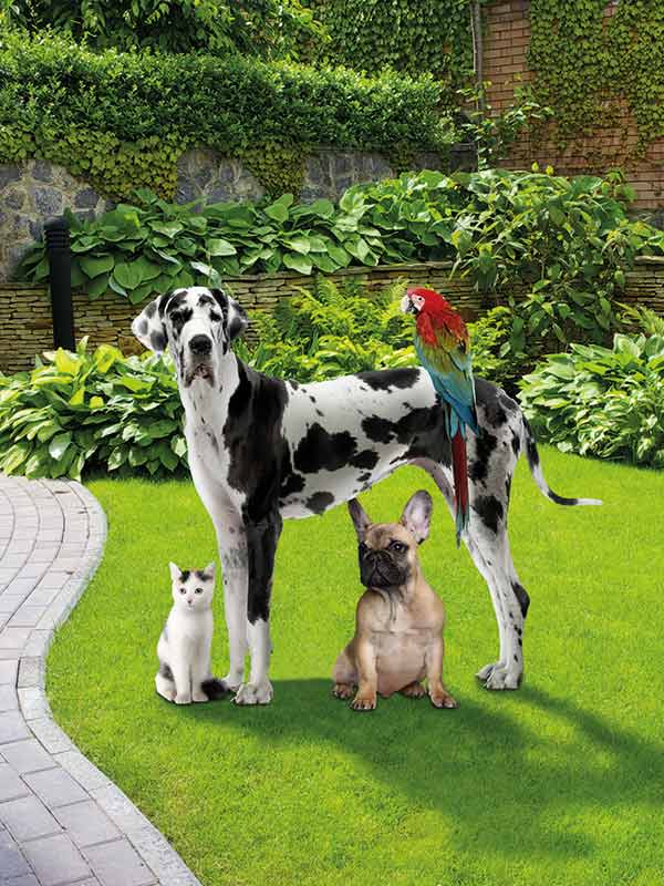 Pet&Garden