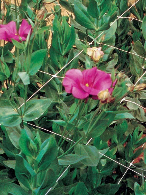 Rete per floricultura