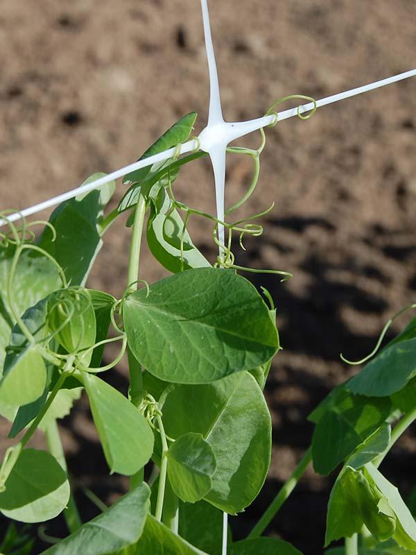 Climbing plant net