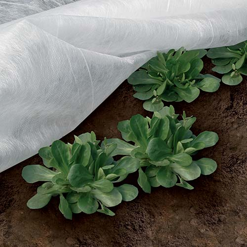 Velo protettivo invernale per piante e colture