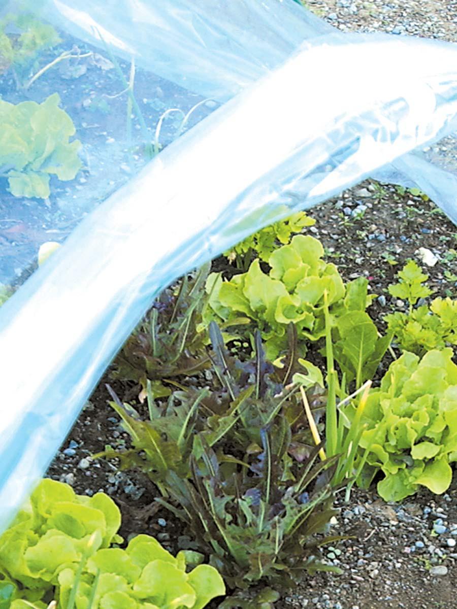Film impermeabile trasparente per colture orto