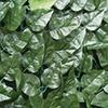 maglia DIVY LAURUS NET tenax
