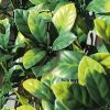 Synthetic hedge DIVY LAURUS PLUS 3D with PE leaves on a plastic mesh