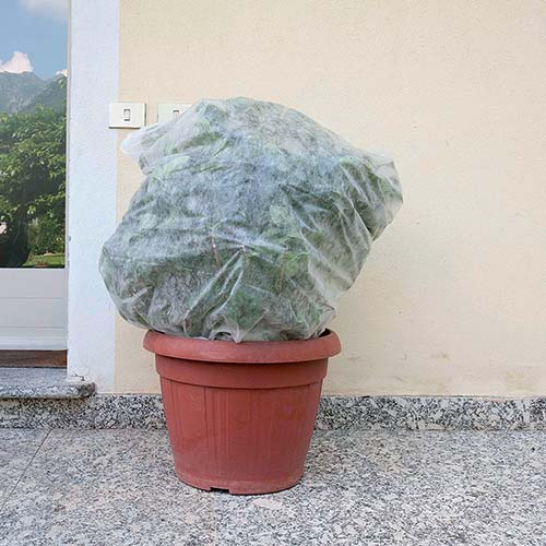 Tessuto non tessuto pre-tagliato leggero per piante