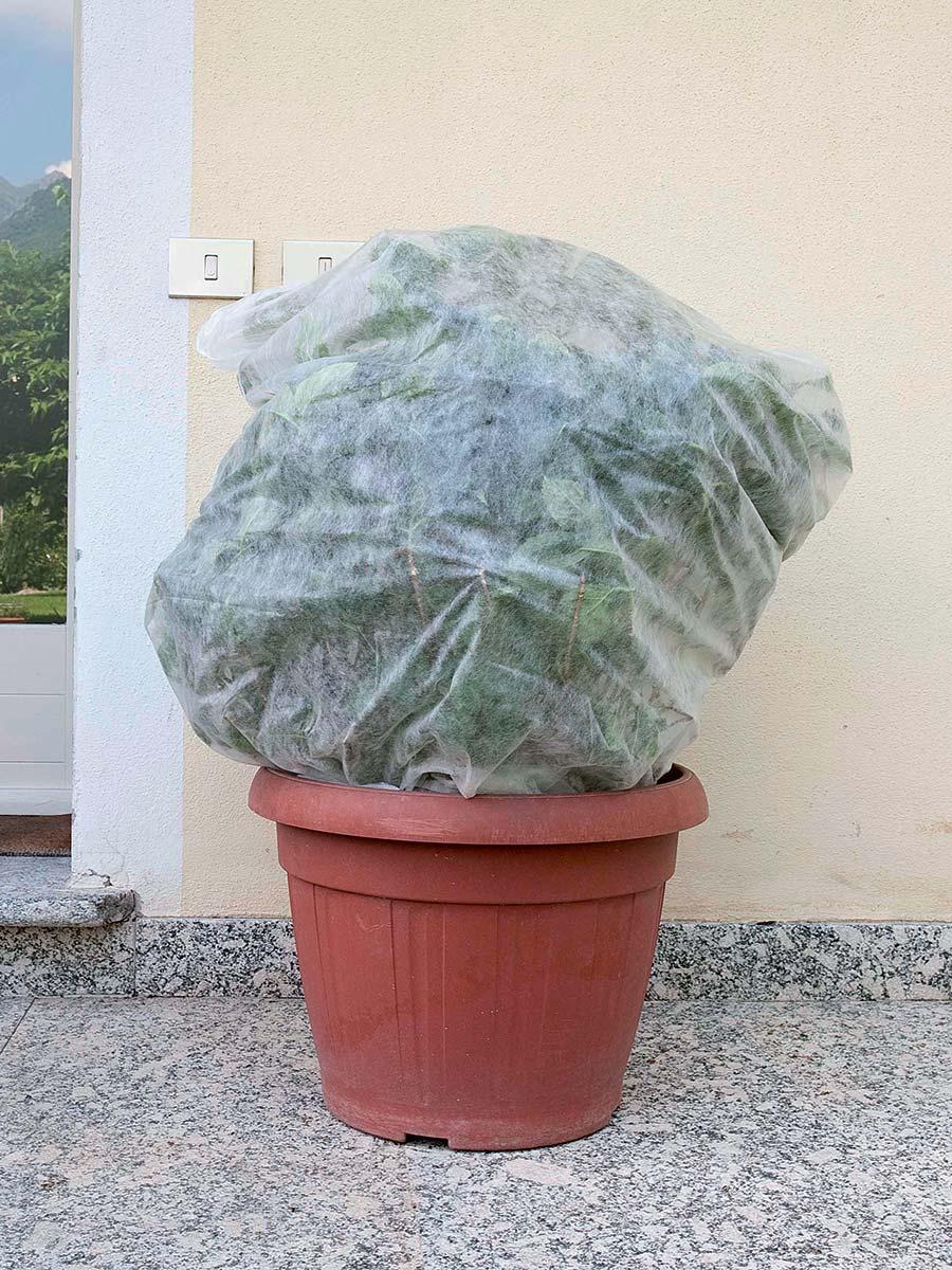 Cappuccio protettivo leggero per piante