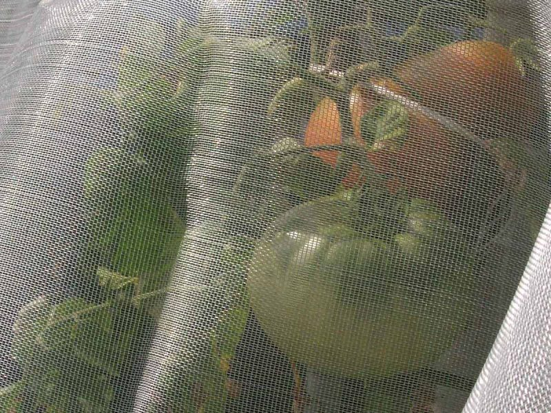Anti-insect mesh to protect crops from insects