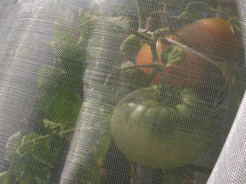 Rete anti-insetti per la protezione delle colture