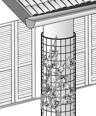 Installazione rete per rampicanti TENAX COROLLA su parete