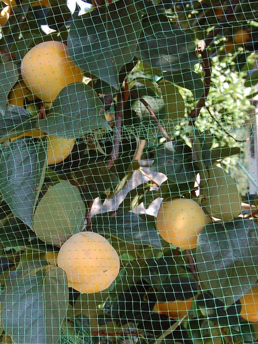 Rete antiuccelli per la protezione di piante da frutto
