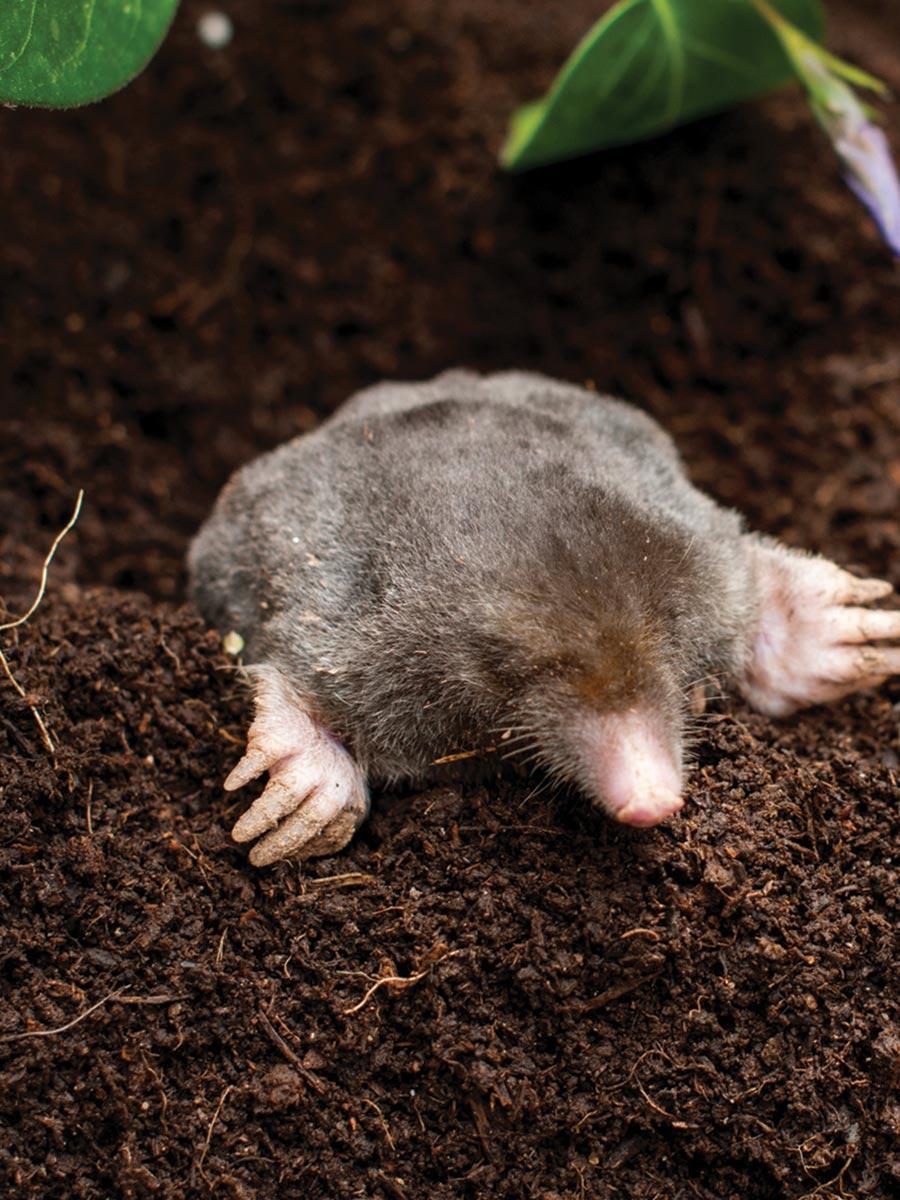 Rete da interro per proteggere le colture dai danni delle talpe