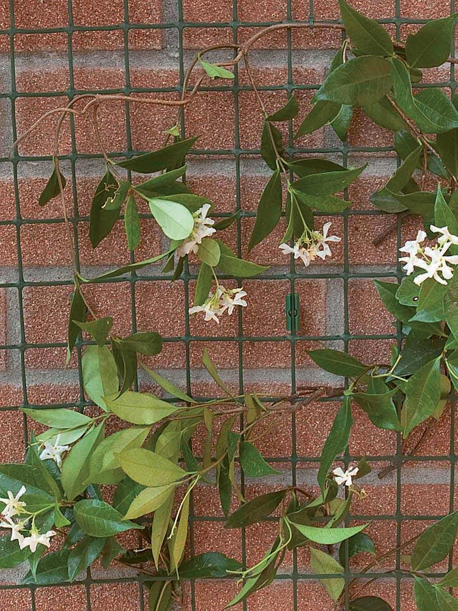 Tutori Per Rose Rampicanti vine net. climbing support. tenax.