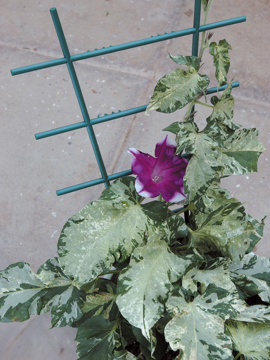 sostegno a scala per fiori a cespuglio