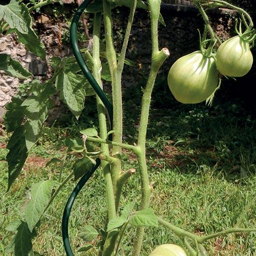 Tutore a spirale per la coltivazione dei pomodori SPIRAL UP