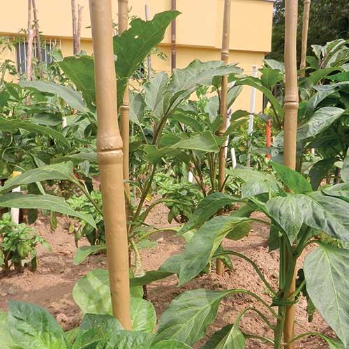 Tutore simile al bambù per piante e fiori TENAX BAMBOO UP