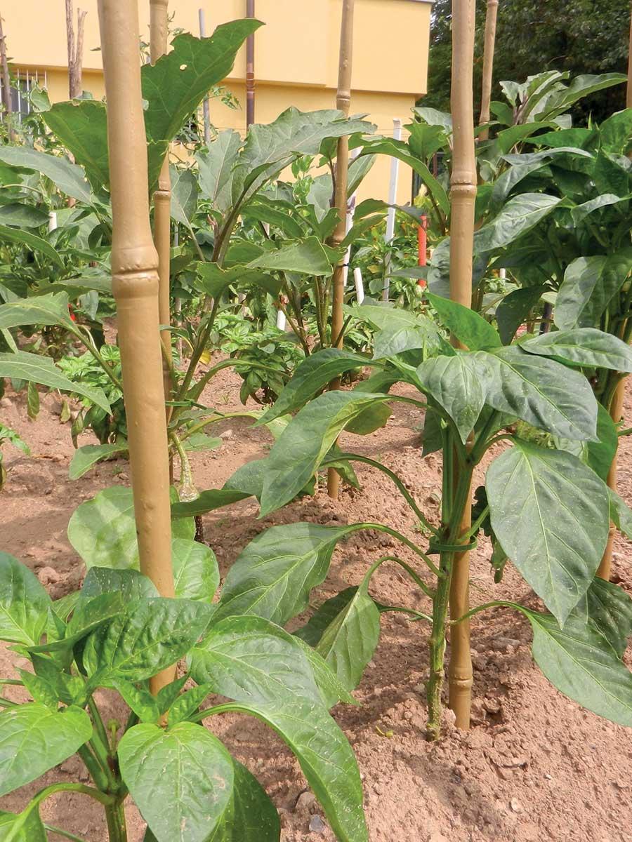 Tutore sintetico simile al bambù per piante e fiori TENAX BAMBOO UP