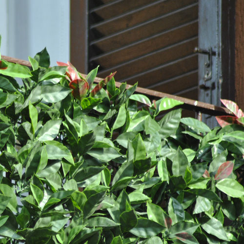 DIVY 3D PANEL PHOTINIA