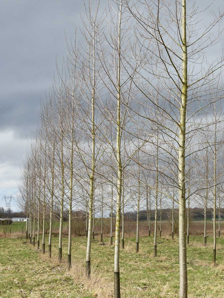 Rete-protezione-piante-tree-trunk